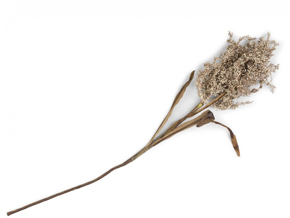 Wild Dried Look Millet Spray - 82 Cm